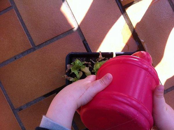 Arroser, planter, demandent de la concentration pour un bébé