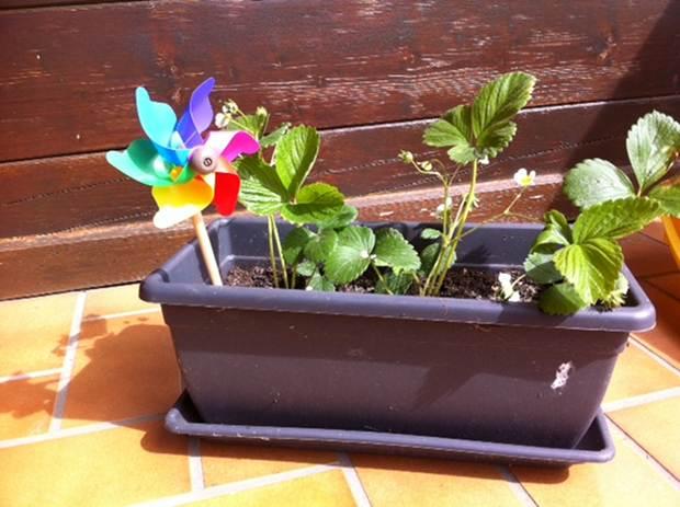 L'éveil au jardinage pour votre tout petit