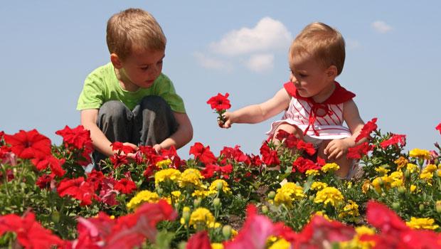 Connaître et reconnaître les fleurs toxiques