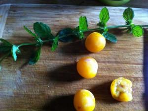 Lavez quatre mirabelles et une branche de mélisse et séchez-les doucement à l'aide de papier absorbant.