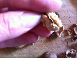 Enlevez la petite peau qui se trouve entre les deux cerneaux
