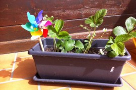 Petites plantes et éveil au jardinage pour bébé