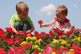 Fleurs toxiques, les connaître et les reconnaître